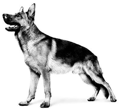 Акционныйассортимент продукции для взрослых собак