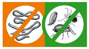 inup-parasits.png