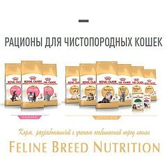 Feline Breed Nutrition - питание в соответствии с породой
